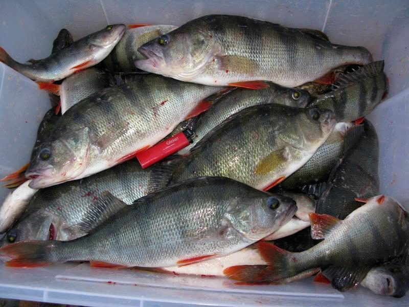 Свежая рыба купить в оренбурге, большой ассортимент и выгодные цены на товары компаний и поставщиков.