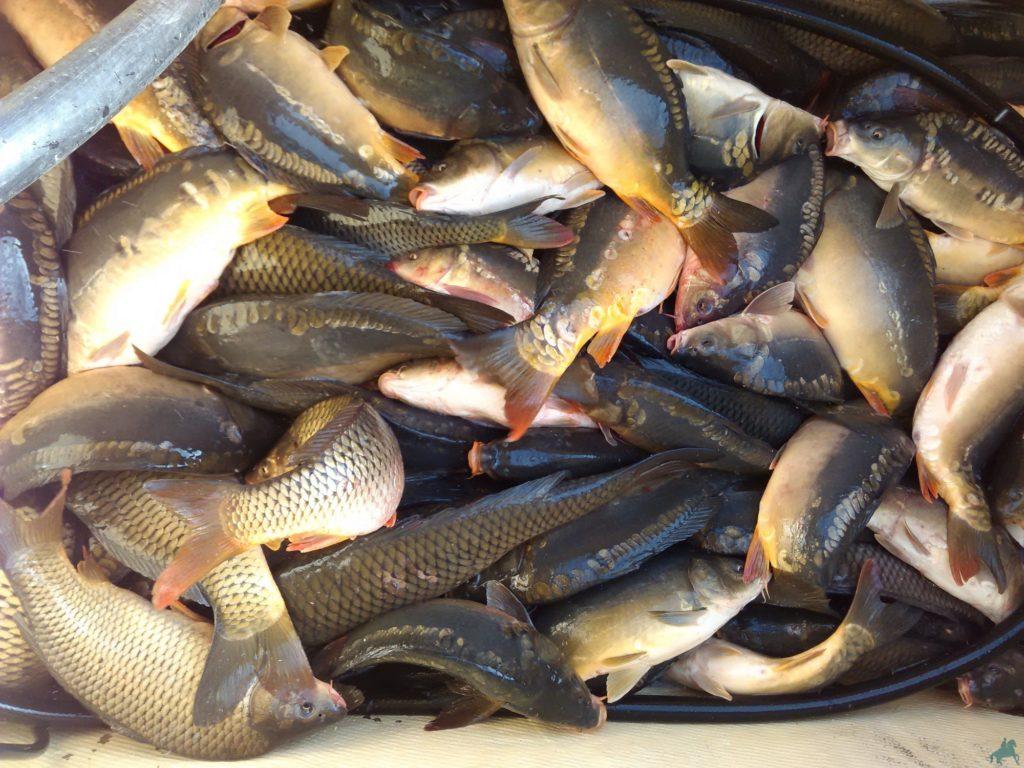 картинки где много рыбы страны встречают