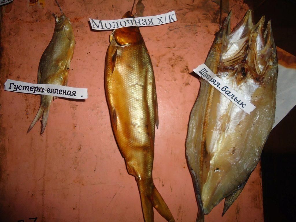 толстолобик речная рыба