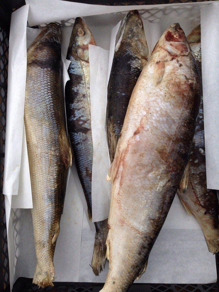 Якутская рыба в москве купить