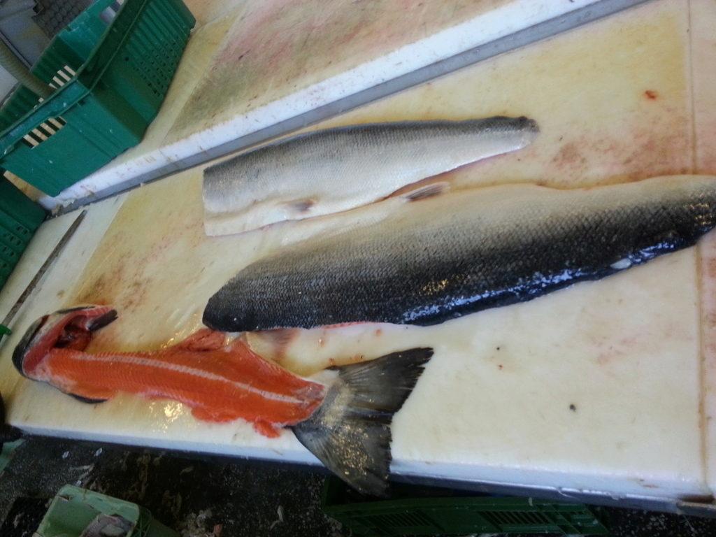 рыбалка на филе рыбы