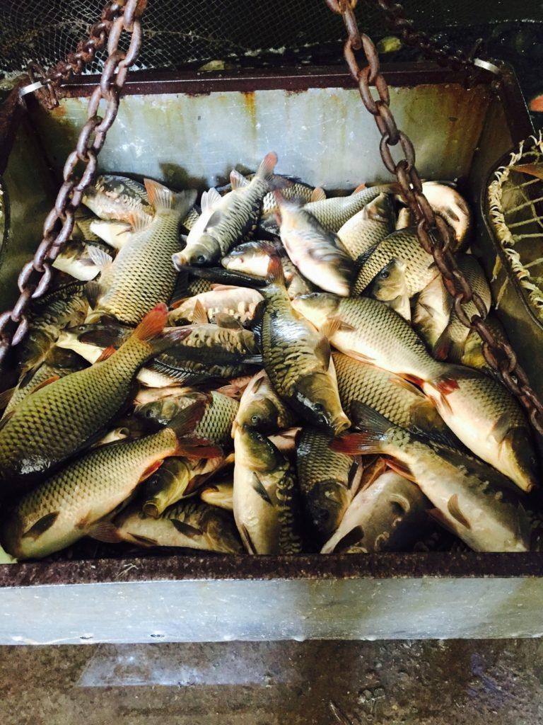 Питомник рыбаки