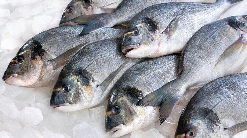 Замороженная рыба во сне для женщины